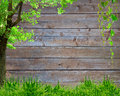Spring green grass and leaf plant over wood fence background Royalty Free Stock Photo