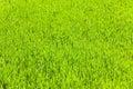 Spring Green Grass (nature Bac...