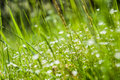 Spring green grass selective focus forest glade with a summer Stock Images