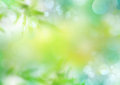 Spring green nature blur background.