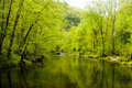 Spring green reflecting off water Royalty Free Stock Photography