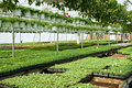 Spring greenhouse nursery Royalty Free Stock Photo