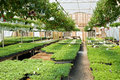 Spring greenhouse nursery Stock Images