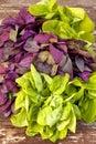 Spring greens organic mix ingredients Royalty Free Stock Image