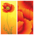 Spring greeting card with poppy Royalty Free Stock Photography
