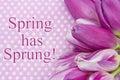 Spring has Sprung Greeting Royalty Free Stock Photo