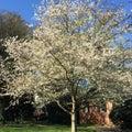 Spring has sprung Royalty Free Stock Photo
