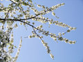 Spring is here Stock Image