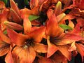 Spring is here orange flowers for Stock Image