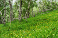 Spring hillside Royalty Free Stock Photography