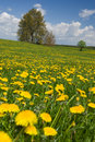 Spring landscape. Royalty Free Stock Photo