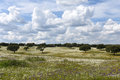 Spring landscape of Alentejo landscape between the village of Fl Royalty Free Stock Photo