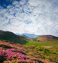 Spring landscape with the cloudy sky and Flower Stock Photo
