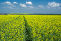 Spring landscape with flowering rape-seed field Royalty Free Stock Image