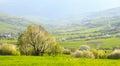 Spring landscape flowering slopes of the carpathi evening green carpathian mountains Royalty Free Stock Images