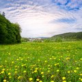 Spring landscape, fresh green meadows Royalty Free Stock Photo