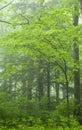 Spring Landscape, Great Smoky Mtns Nat Park, TN Royalty Free Stock Photo