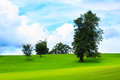Spring landscape with green grass and trees Stock Photography