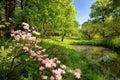 Jaro rybník