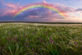 Spring landscape with rainbow in a large meadow feather grass and flower Royalty Free Stock Photo