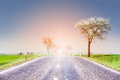 Spring landscape with road and wild cherry blossoms over field sky Stock Photo