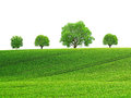 Spring landscape with rolling field and trees Royalty Free Stock Photo