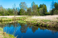 Spring landscape with a small river. Royalty Free Stock Photo