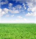 Spring lawn and beautiful blue sky Royalty Free Stock Photo