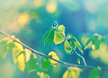 Spring leaves green leaves in april and may beautiful branch with fresh Royalty Free Stock Photography