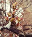 Spring leaves and snow