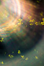 Spring leaves and sun flare Royalty Free Stock Photo