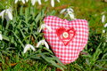Spring love heart on grass surrounded by snowdrops as a concept for or environmentalism Royalty Free Stock Photo
