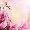 Jaro magnólie květiny hranice