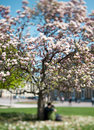 Spring magnolia tree. young romantic couple Royalty Free Stock Images