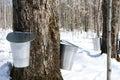 Spring � maple syrup season Stock Photos