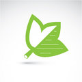 Spring maple tree leaf, botany and eco flat image. Vector illustration