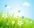 Spring meadow beautiful Stock Photography