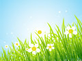 Spring meadow beautiful Stock Image