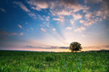 Spring meadow with big tree sunset Royalty Free Stock Photo