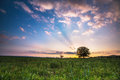 Spring meadow with big tree sunset Stock Photography