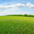 Spring meadow and blue sky Royalty Free Stock Images