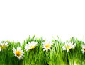 Spring meadow with daisies grass and flowers border art design Stock Photography