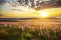 Spring meadow of flowers composition nature Royalty Free Stock Image