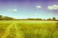 Spring meadow in hungary clear blue sky wheel tracks hungarian countryside vintage photo a moment of stillness Royalty Free Stock Photography