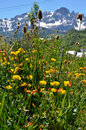 Spring meadow in the spanish mountain summer with tall grass and flowers are photographed closely background there is range Royalty Free Stock Image