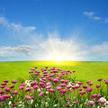 Spring meadow and sun Royalty Free Stock Images