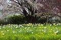 Spring meadows Royalty Free Stock Photo