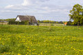 Spring meadows around a rural house Royalty Free Stock Photo