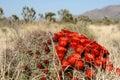 Spring in Mojave Desert Royalty Free Stock Photo