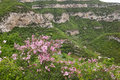 Spring in mountain the wild clove are blooming mountains scientific name syzygium aromaticum Stock Image